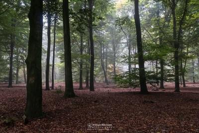 Green Autumn Mood