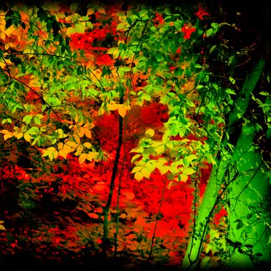 Trees illuminated with coloured light.