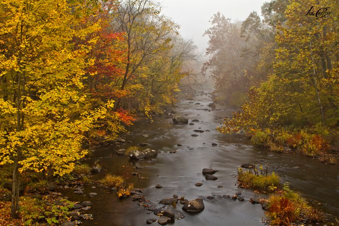 GossHillStream by leacaffrey - The Nature Lover Photo Contest
