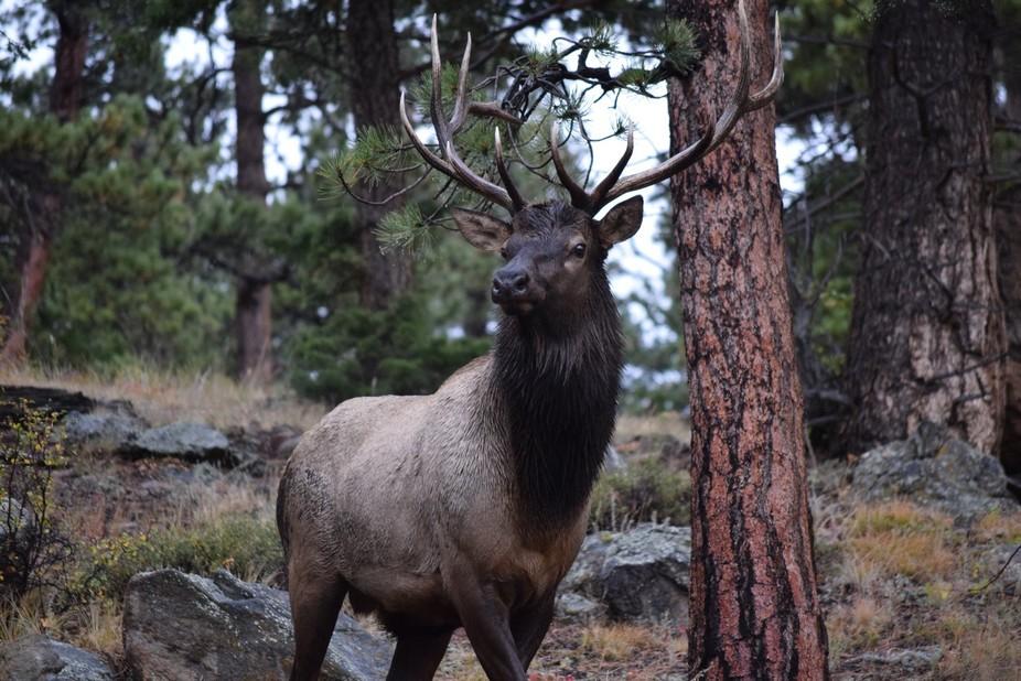 Rocky Mountain National Park_Horseshoe Park