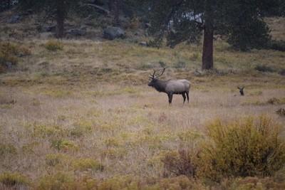 Rocky Mountain National Park_Moraine Park