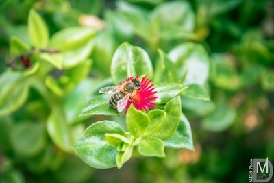 Bee in action