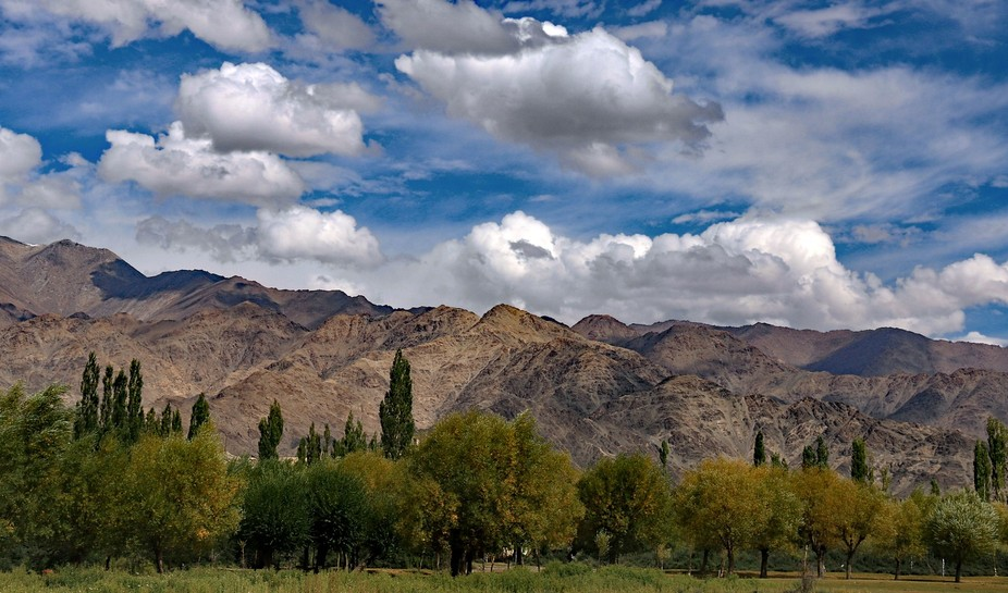 There is not a lot of green in Ladakh except close to the very few rivers.