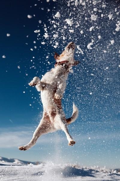 Jumper Terrier