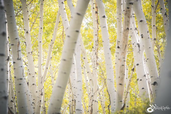 Aspen Field by The_Whitography_Project - Creative Landscapes Photo Contest