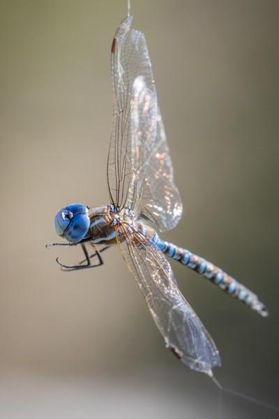 Surfing the Spider Web