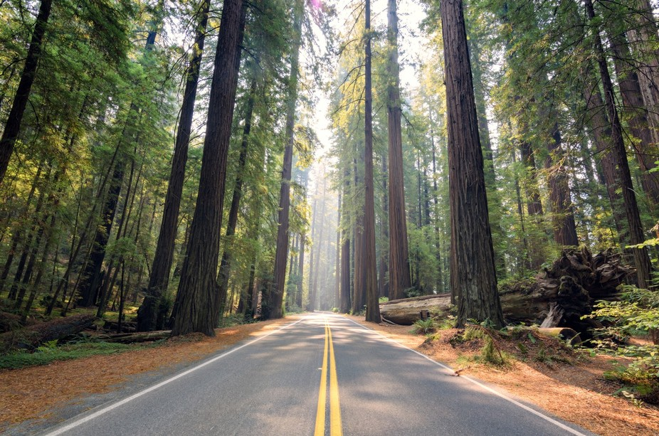 Journey into the Redwoods was taken while driving through a scenic area in northern California. T...