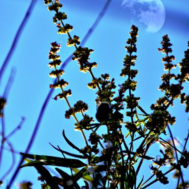 Flower Stems and moon.