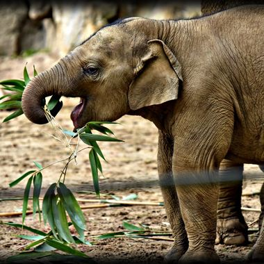 Such a playful beautiful little elephant baby.