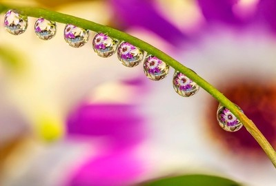 Pink Senetti Water Drops Refraction