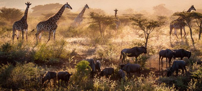 This is Africa! by kimpaffen - Explore Africa Photo Contest