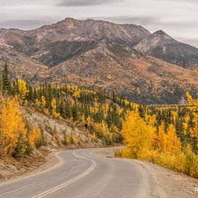 This was taken along the first 13 miles of the Denali National Park road. The first 13 miles can be driven in your own car after that you must ta...