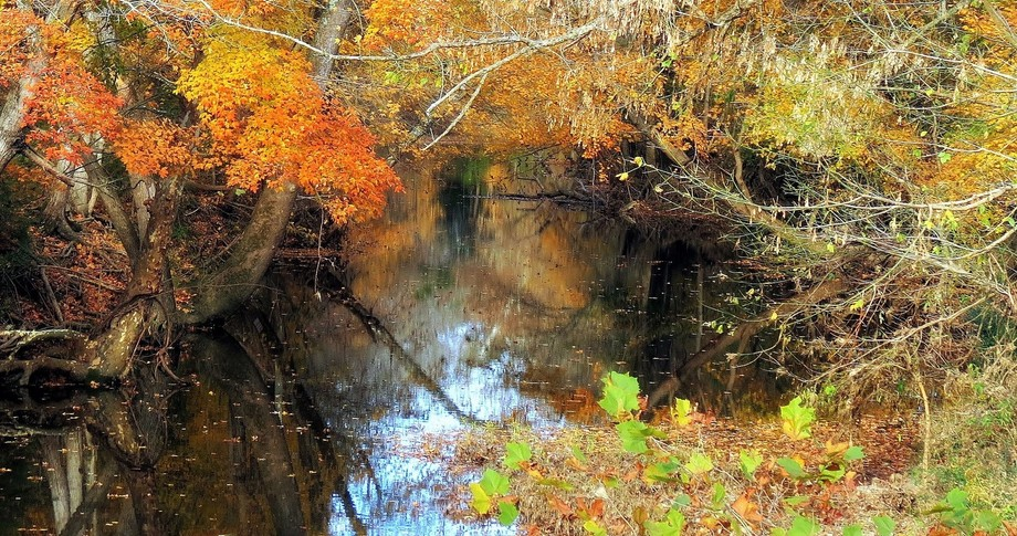 Magic Kingdom of Fall