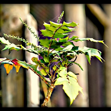 Branch just showing start of autumn.