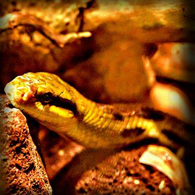Snake at Osnabrück Zoo.