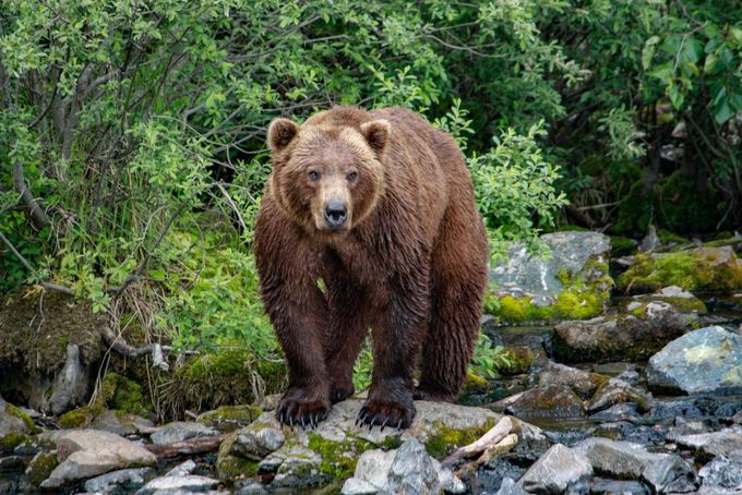 Hey Bear by GretchenLizG - Bears Photo Contest