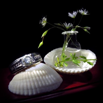 Composition with the wedding diamond ring, white flowers and sea shells.