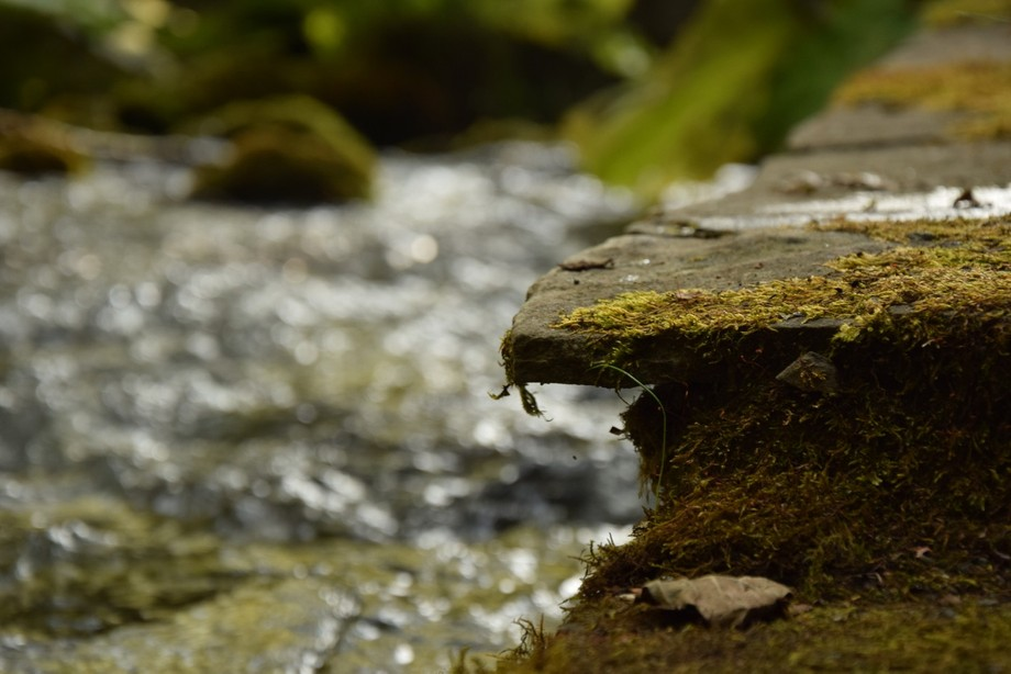 While I was in vaction in a small village in Greece, I was at a spring which flowed into a river ...