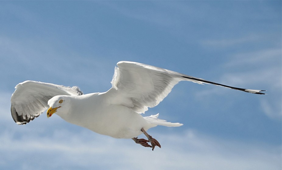 On my way to Martha's Vinyard one day via the ferry. This little guy was flying so close that i...