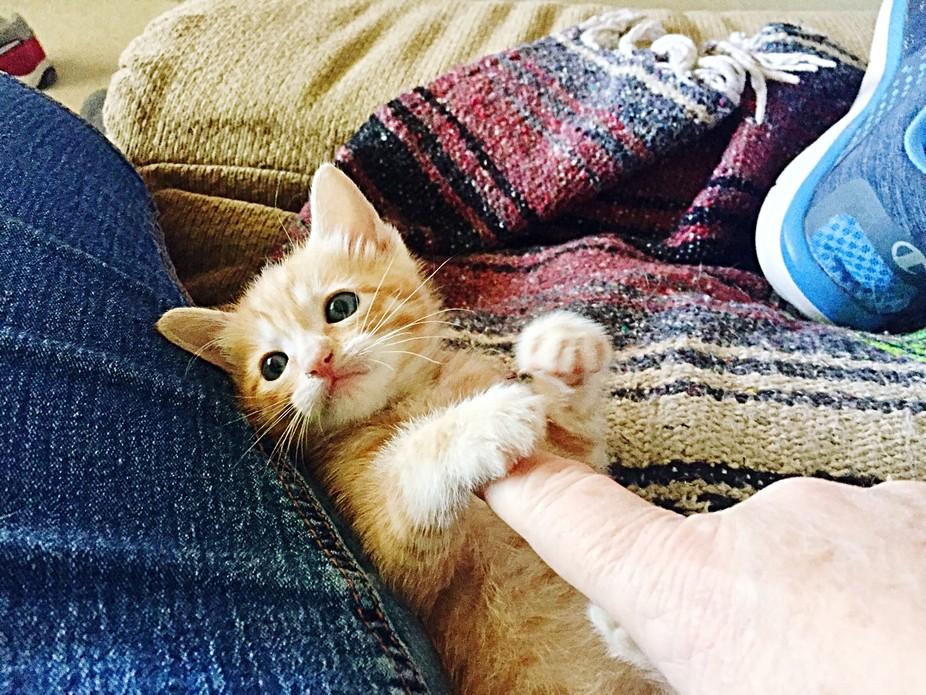 Yoshi Kitty