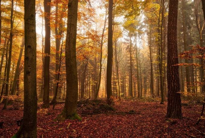 autumn forest by pixelmac - Creative Landscapes Photo Contest