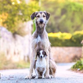 Oh nothing to see here. Just two polar opposite, bestest buddies on a back country road in the Provence region of France. Just another ordinary d...