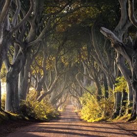 The Dark Hedges in Northern Ireland, more recently famous as Kings road in the Game of Thrones Television series.  I had been waiting here since ...