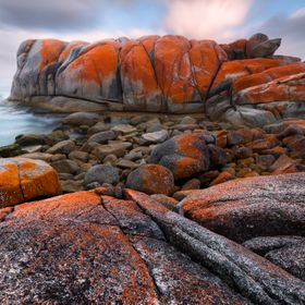 the lichen covered rocks of Tasmania's east coast.  The Gardens, Bay of Fires, Tasmania