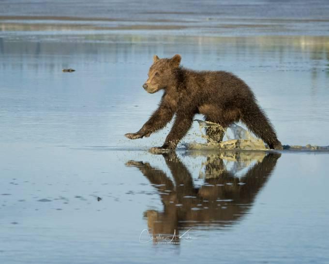 Splish Splash by ClaudiaKuhn - Animals And Water Photo Contest