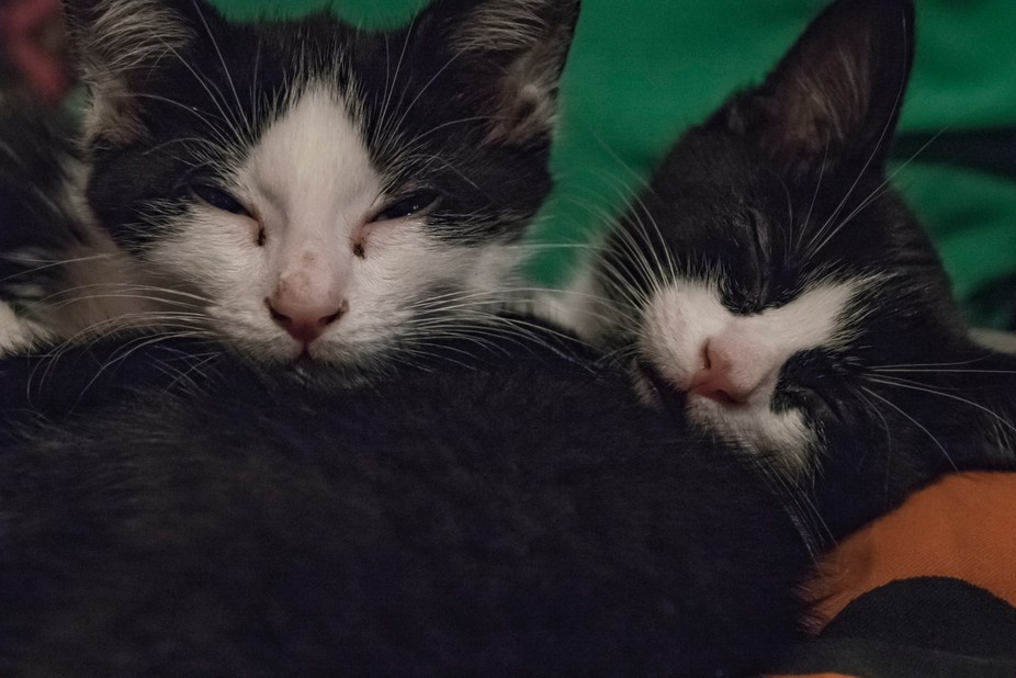 Our new family members - kitten brothers.