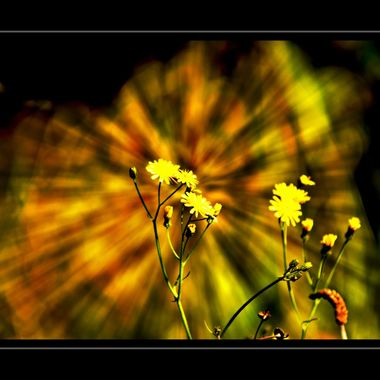 Flowers with a motion effect background.