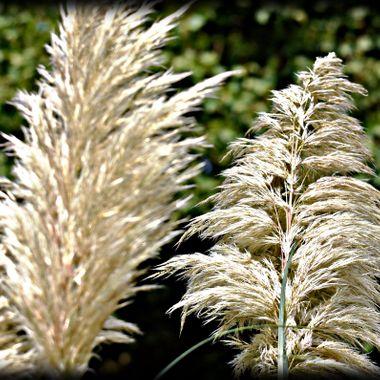 Grass found at Osnabrück Zoo.