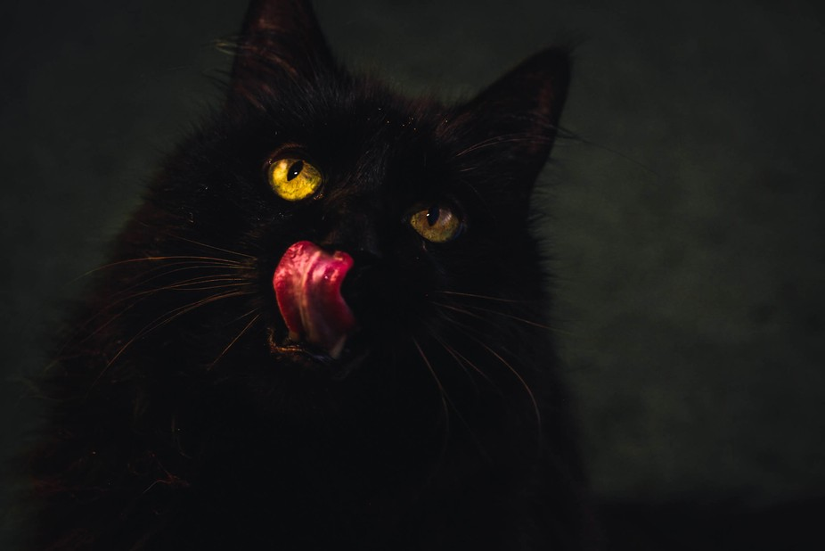 My old cat Zeke :)