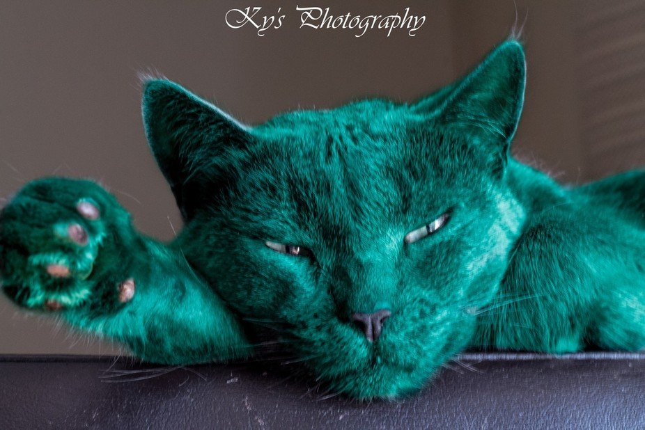 This is my beautiful kitty, tuna. Also my first attempt at colour swaping :D had fun doing this s...