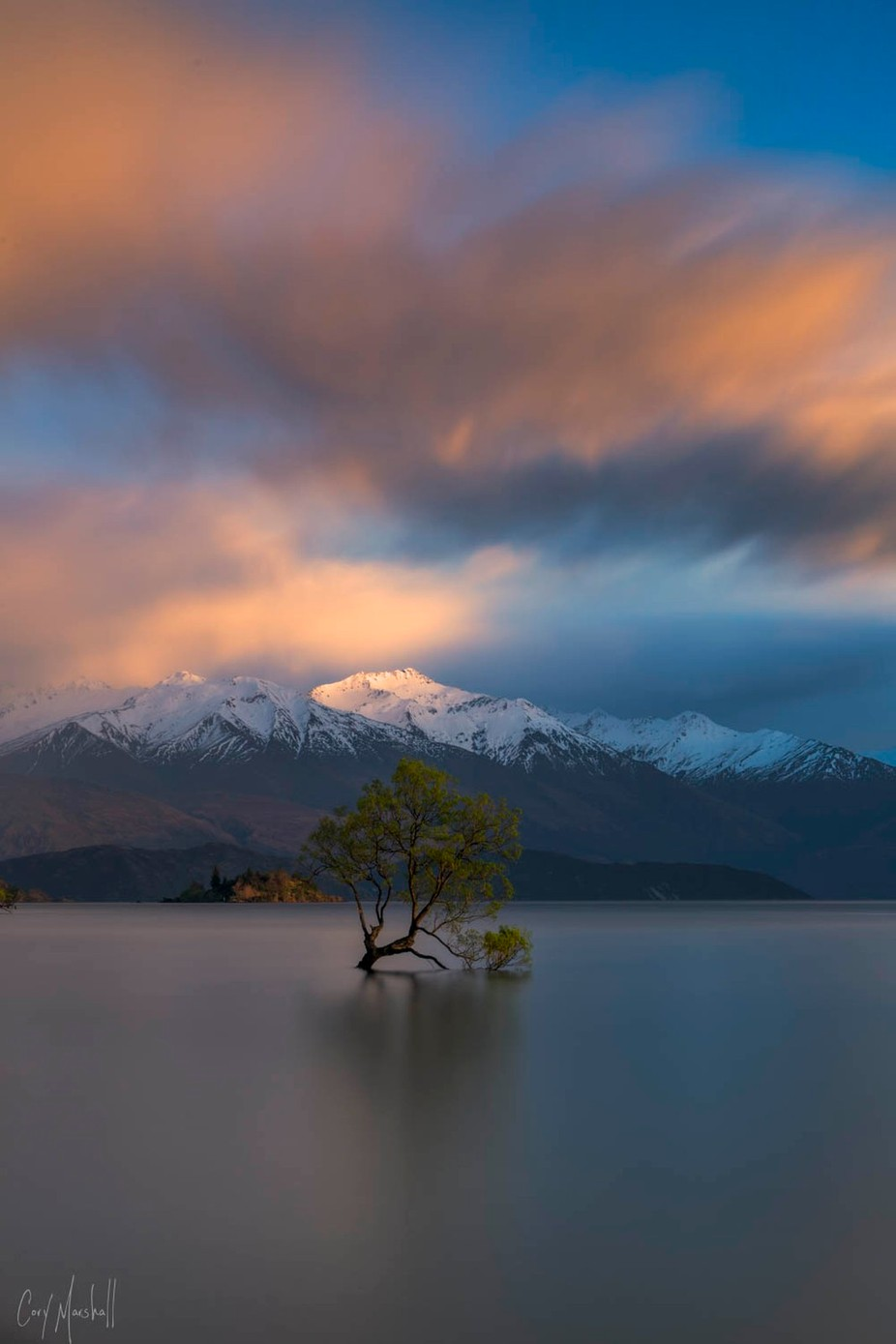 Wanaka Tree by corymarshall - Image Of The Month Photo Contest Vol 27