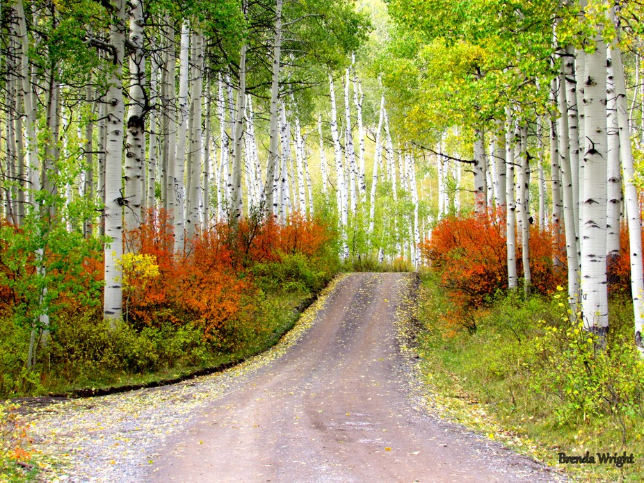 Found a treasure trove of color in the Grand Mesa National Park. I went down the Ute Trail to fin...