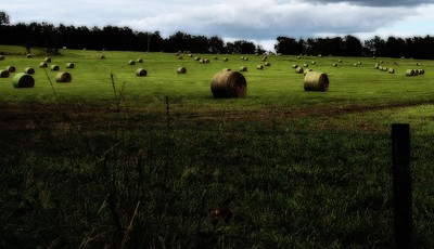Hay Bales are Ready