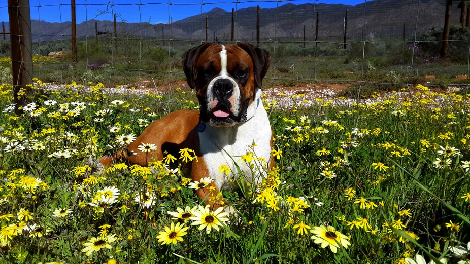 Leo & the Daisies