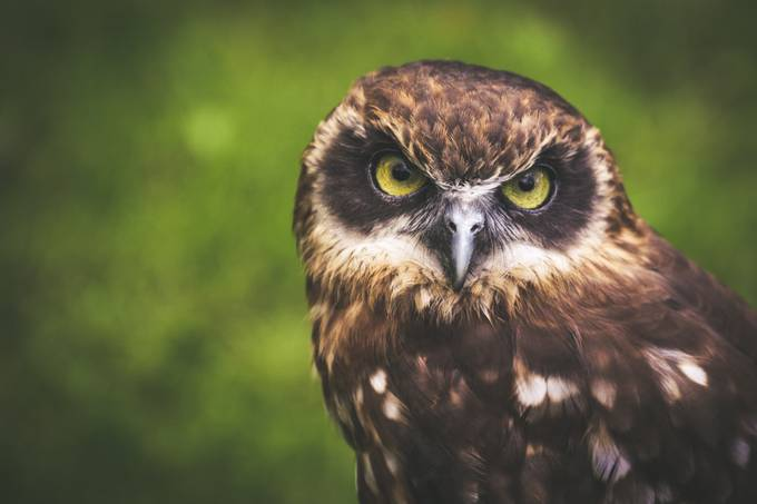 OWL by alekseisolovjov - Everything Bokeh Photo Contest