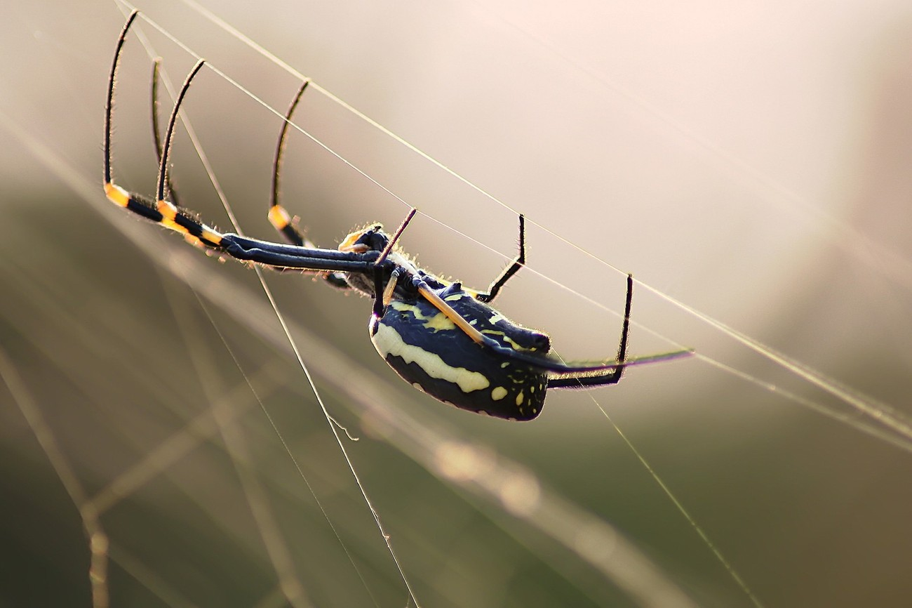 Spider busy weaving its web