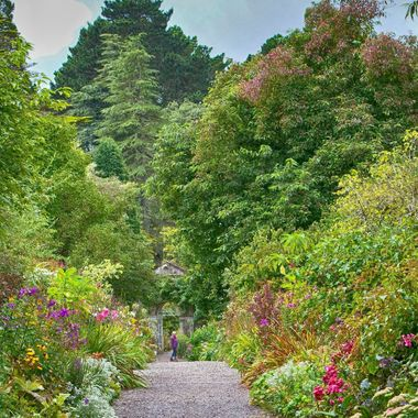 I took this photo when we went on a trip to Ireland, in August 2017. This photo was taken at the gardens of Garinish Island.