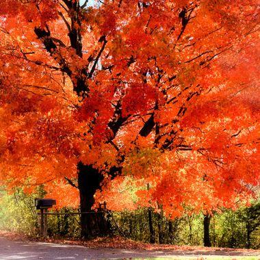 fall mailbox glam.jpg  13x 20 428