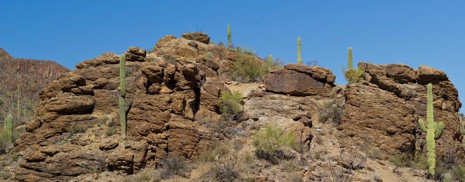 Majestic saguaros on top of a peak