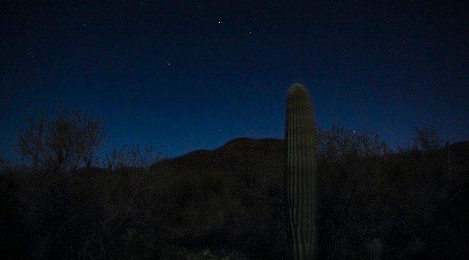 the stars and mountains behind a saguaro - a still frame of a frequently used clip from the tv show Ancient Aliens