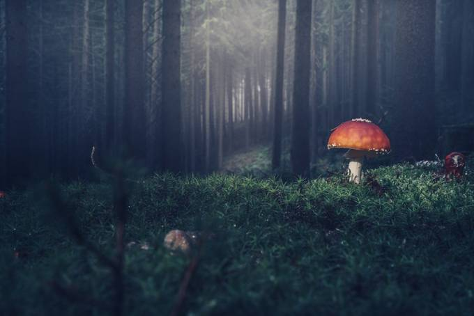 by HatcatPhotography - Mushrooms Photo Contest