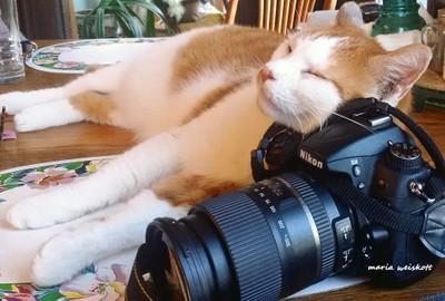 Nappin' on a Nikon