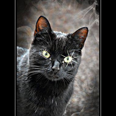 Cat manipulation with stars.