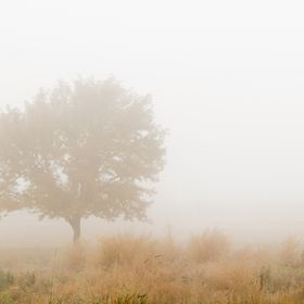 Fog hangs in the air in this fall scene.