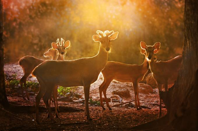 young deer by joecas - Fall 2017 Photo Contest