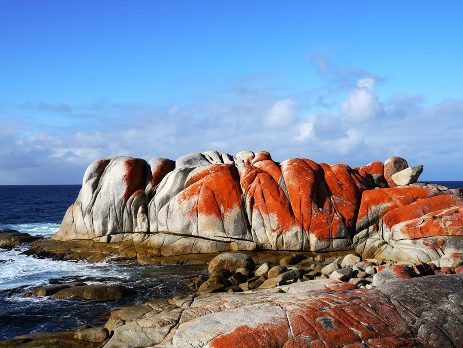 The lichens that grow on the rocks in the Bay of Fires in Tasmania have an incredible orange colo...